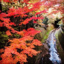 北野天満宮の紅葉の写真