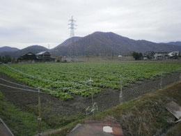2010年12月11日 :寒さが深まってきたささ営農付近の風景です。