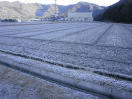 2011年1月8日  :年末年始と寒風吹きすさぶ、震える寒さの中で天候も一段落した穏やかな風景です。