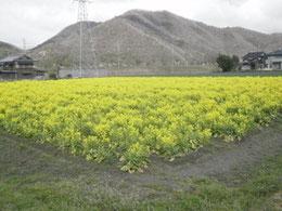 2011年4月9日 穏やかなささ営農 PART2