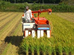 2011年9月17日 稲刈りがはじまりました!