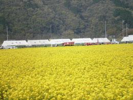 2010年4月17・18日 : 菜の花まつり前日と当日