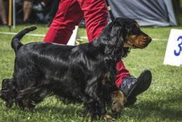 chien noir et feu en exposition canine par coach canin 16 educateur canin Cognac angoulême