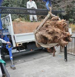 根の掘り取り