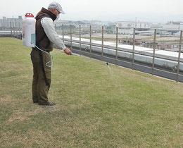芝生用、除草剤散布中