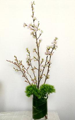 美意識を高める食器とお花の世界 第6回 おうちでお花見、桜を飾ってみよう! ⑨