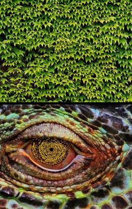 Verzerrungsfilter Polarkoordinaten: Reptilienauge