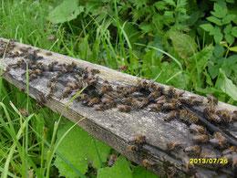 извилистая речка у пчелок