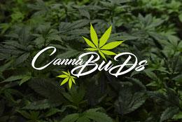 Cannabuds Ziel