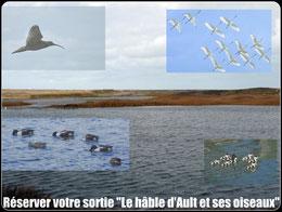 Découvrir les oiseaux dans la hâble d'Ault©Découvrons la Baie de Somme
