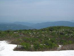 ▲鳥原山山頂付近から鳥原山の池塘を望む。タムシバ(ニオイコブシ)が咲き乱れ楽園のよう。