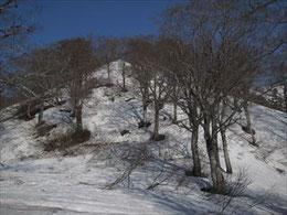▲4合目看板から先の斜面はさすがに一面雪が…