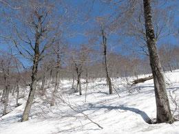 金山沢からの対岸は雪渓の上を青空の尾根へ向かって自由に進む。