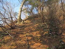 ▲右斜面にはイワウチワが咲き乱れていた