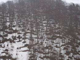 ▲山の木々の根元から雪が融け、やまは網目模様になっています。