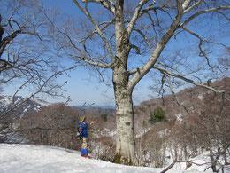 ブナの巨木がゴロゴロあり、圧倒される。