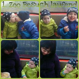 mit überraschenden Fotos ... (25-03) .. Besuch im Doppelmayerzoo und Leano ist einmal durch schön gelaufen. ;-)