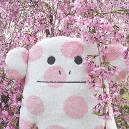 Loris et les Sakura