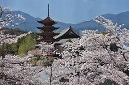 これぞ「私の傑作」            桜花爛漫/ひろしまフォト歩き
