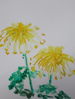 ハガキに描いた菊