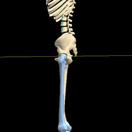 股関節 体型 O脚
