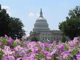 das Capitol