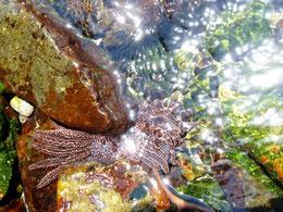 Faune et flore marines du coté d'Iquique