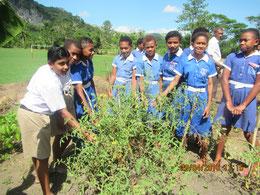 楽しみながら有機農業に取り組む子どもたち