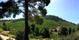 Porto Carras Weingut Sithonia Griechenland Greece Ellen Warstat Mt. Meliton