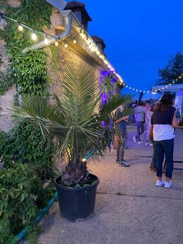 Pflanzenverleih im Raum Höchberg, Würzburg, Waldbrunn, Eisingen, Waldbüttelbrunn, Hettstadt, Kist