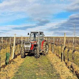 Weinland, Thermenregion, Frühling, Sommer, Weingarten, Handarbeit, Laub, Reben, Bad Vöslau, Traktor