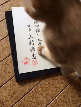 厚木 合気道 浩心館館長の愛猫
