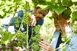 Besucher im Wein auf dem dänischen Weingut Skaarupøre Vingaar auf Fünen. Foto: PR/Niclas Jessen