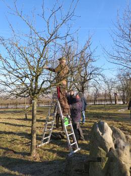Obstbaumschneidekurs NABU Xanten im Winter