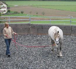 www.horsehealth.ch