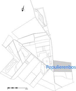 Populierenbos