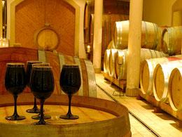 Weinwanderung, Weinlandschaft im Frühling