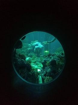 Oman Aquarium, Muscat, Oman