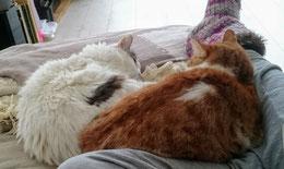 De katten van Loes