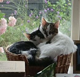 De katten van Marja