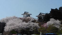 桜満開に映える石川門