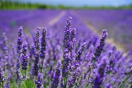 cosmétiques du québec 100% naturels au raisin et huiles essentielles