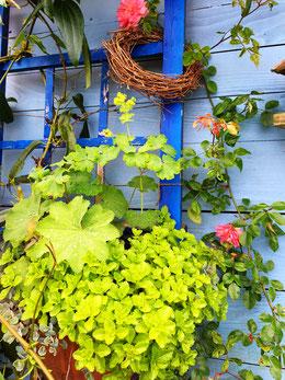 Hängepflanzen am Gartenhäuschen, Fotos von Lovey Wymann's Schreib-Lounge