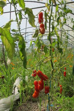Guillaume il fait pousser ses fruits et ses légumes