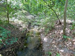 Das Fließtal der Kochsa ist ein 1,0 km langer geschützter Landschaftsbestandteil im Ortsteil Cantdorf der Gemarkung Spremberg.