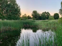 Der Muzoka ist ein Teich im Spremberger Ortsteil Weskow, den der NABU Spremberg pflegt.