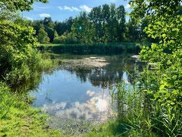 Der See von Groß-Buckow liegt zwischen dem Braunkohletagebau Welzow-Süd und der Ortslage Spremberg auf der Gemarkung des devastierten Dorfes Groß- Buckow.