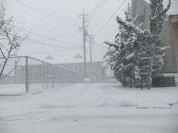 なごり雪!