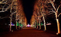 Beleuchtete Allee in Pillnitz