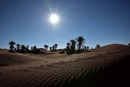 Traumhafte Oasenlandschaft in der Sahara